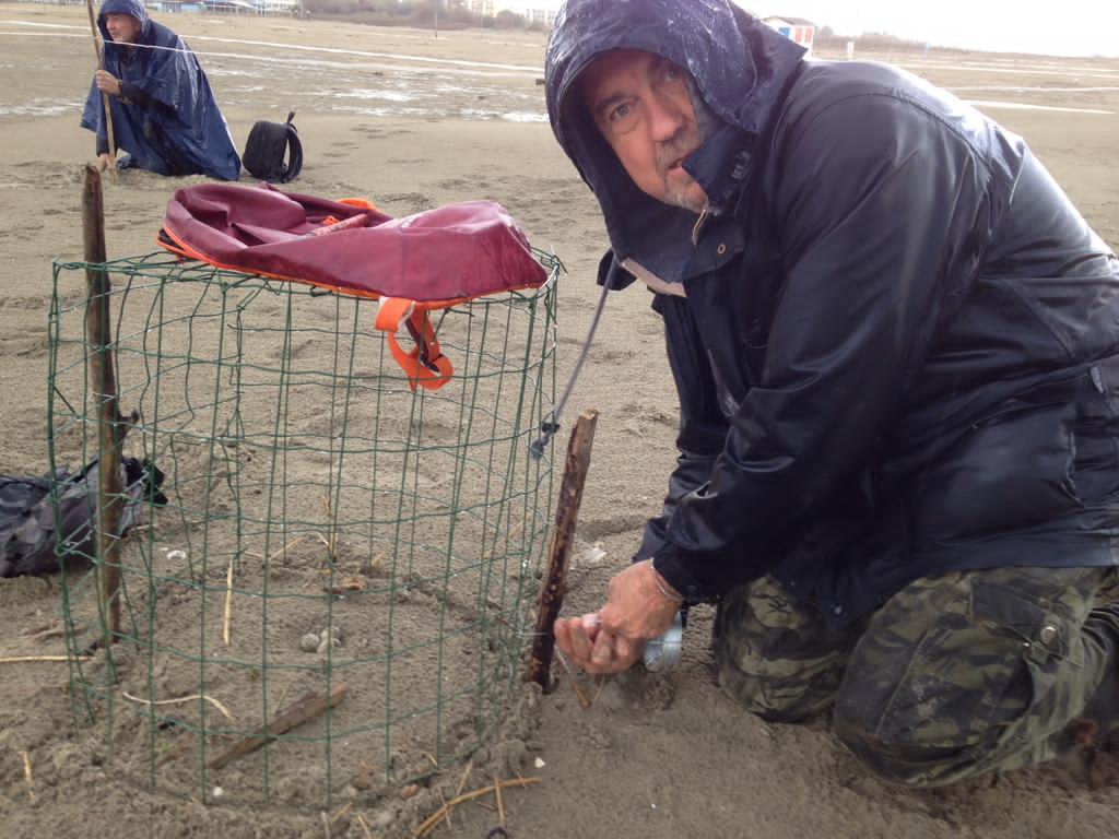 Nidi di Fratino protetti dalle reti allestite dai volontari Asoer
