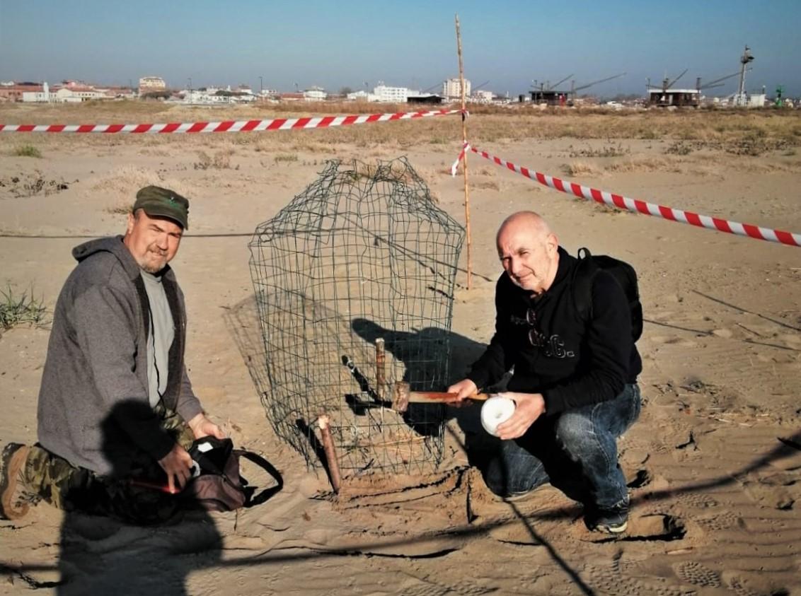 Volontari Asoer accando a un nido di Fratino protetto con apposita rete